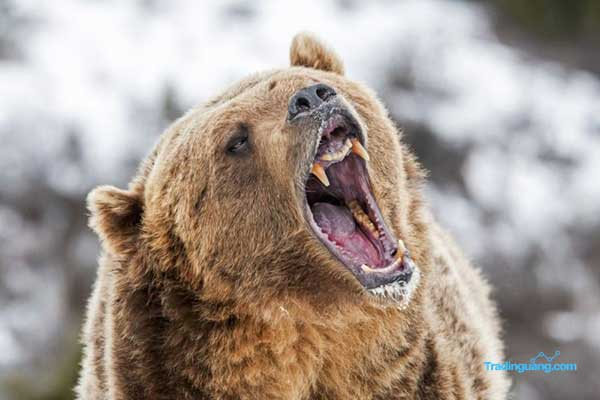 Mengenal Pasar Bearish dan Tipsnya pada Trading Forex