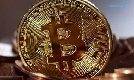 Buru Kebun Ganja, Polisi Inggris Justru Temukan Tambang Bitcoin