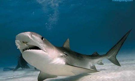 Panduan Memahami Pola Harmonic Shark bagi Pemula pada Trading Forex